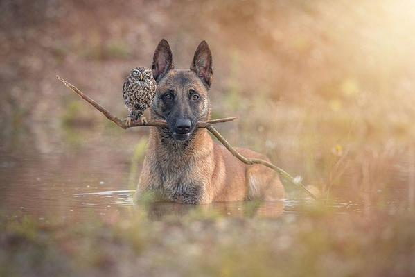 He's a maverick dog, she is an owl who doesn't play by the rules. Together they fight crime.