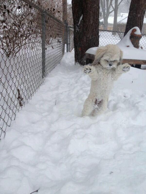 Minnesota Yeti Caught on Film