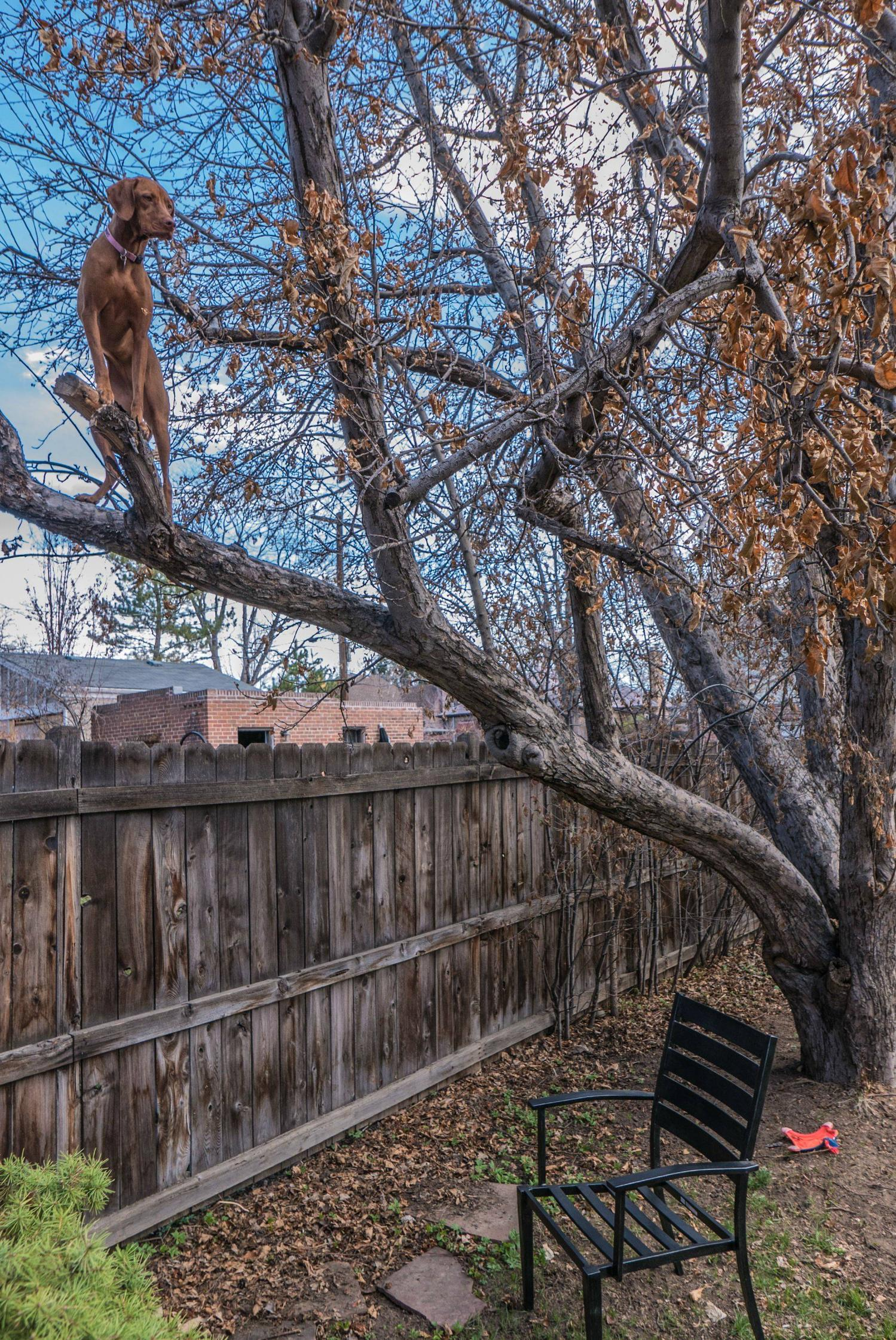 Our dog now climbs trees, no squirrel is safe.