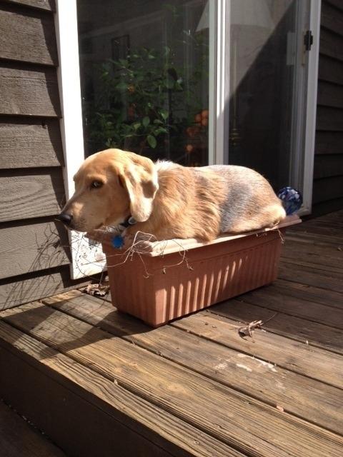 Sunny Tub