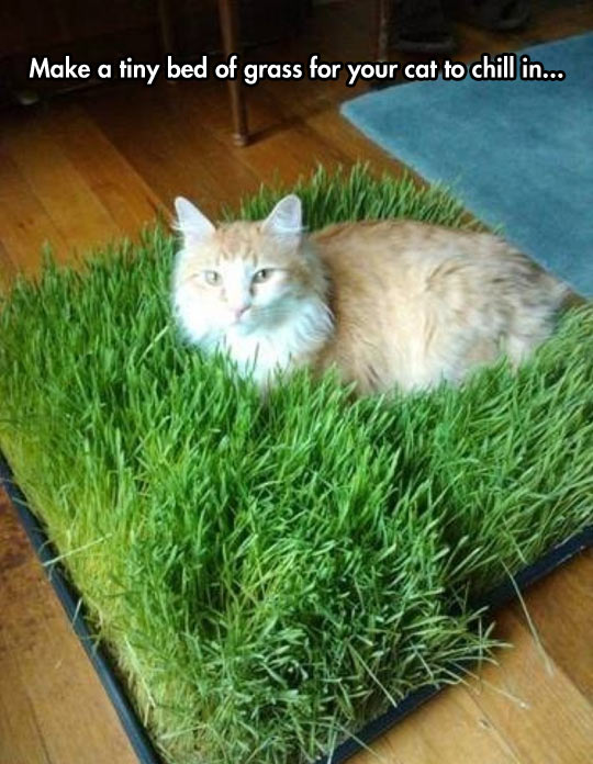 Tiny Bed Of Grass