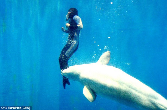 Whale saves free diver who was paralyzed by a cramp by grabbing her leg and pushing her to the surface