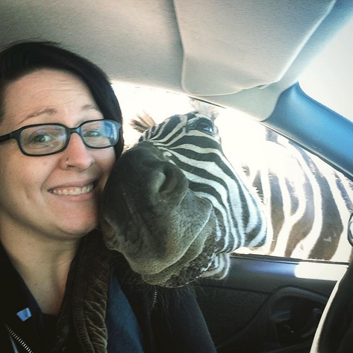 Zebras Love Selfies