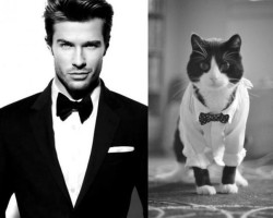 cats_male_models_1