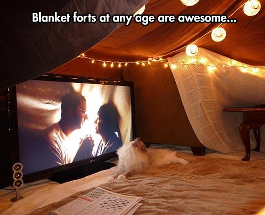cool-blanket-fort-TV-cat-movie