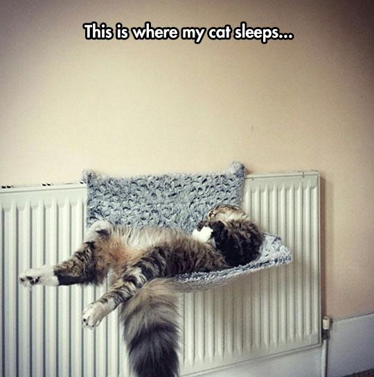 Too Comfortable
