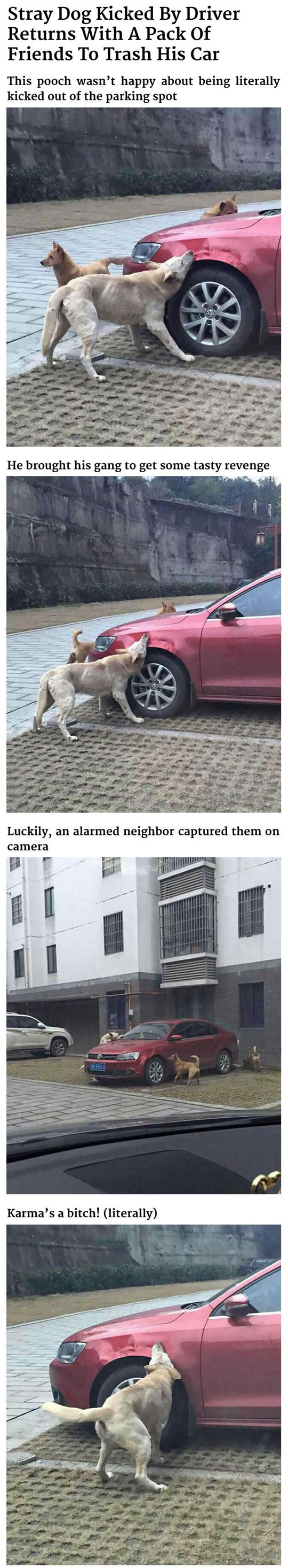 Dogs Getting Revenge