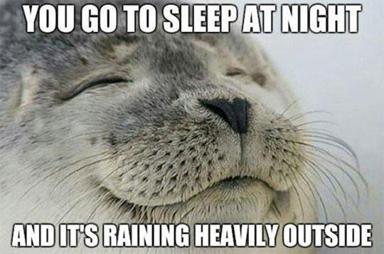cool-heavy-rain-seal-happy