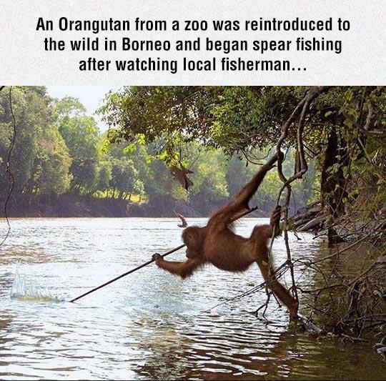 cool-monkey-fishing-spear-river