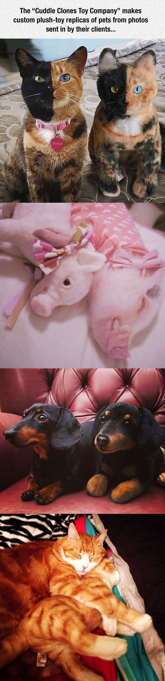 cool-plush-toys-pets-animals
