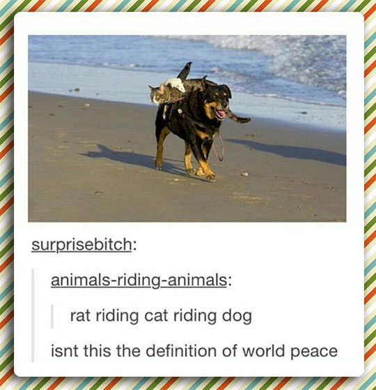 cute-cat-riding-dog-beach
