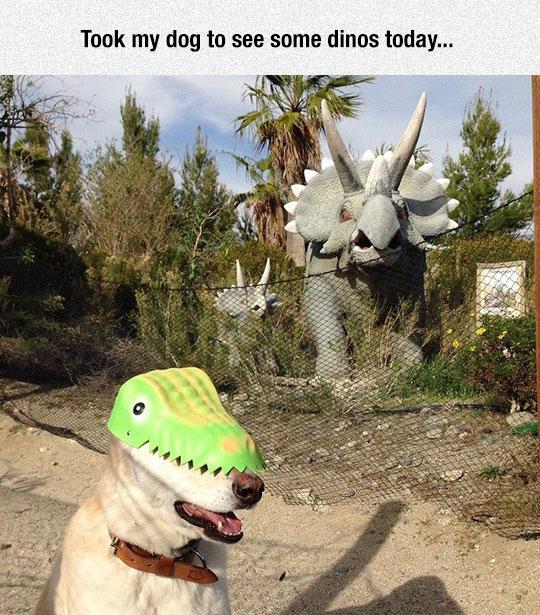 cute-dog-dinosaur-mask-park