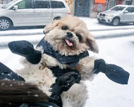 Snowy Derpy Dog