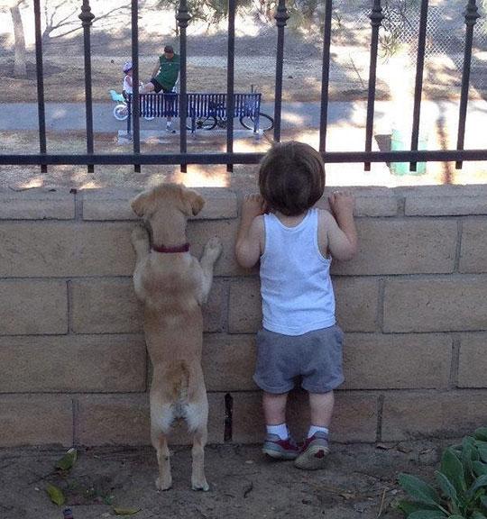 cute-kid-puppy-peeking-over-wall