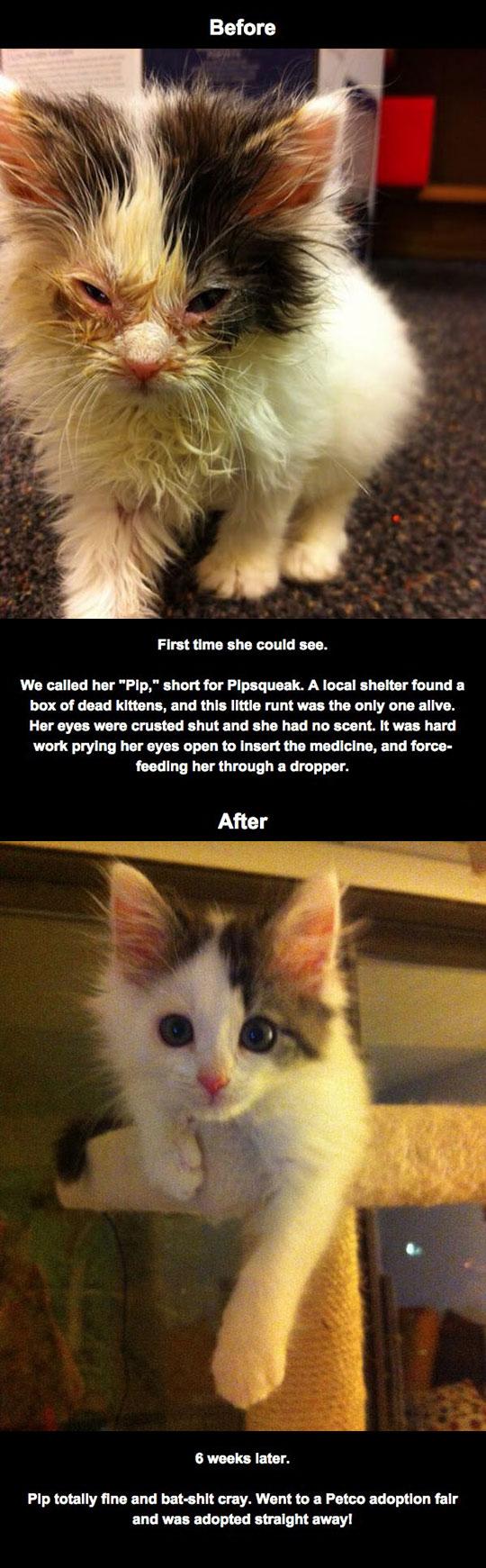 cute-kitty-blind-eye-infection