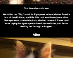 Rescued Kitty Initially Blind From Eye Infection, Recovers Sight
