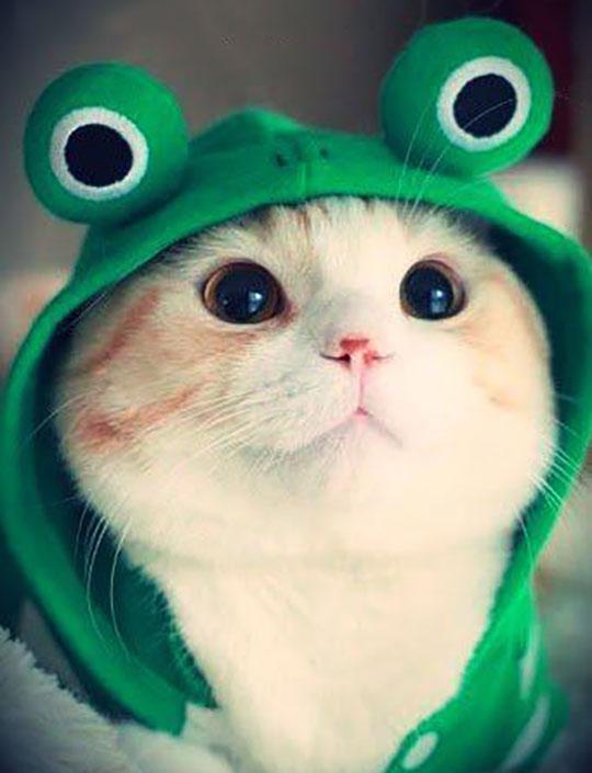 cute-kitty-frog-hoodie