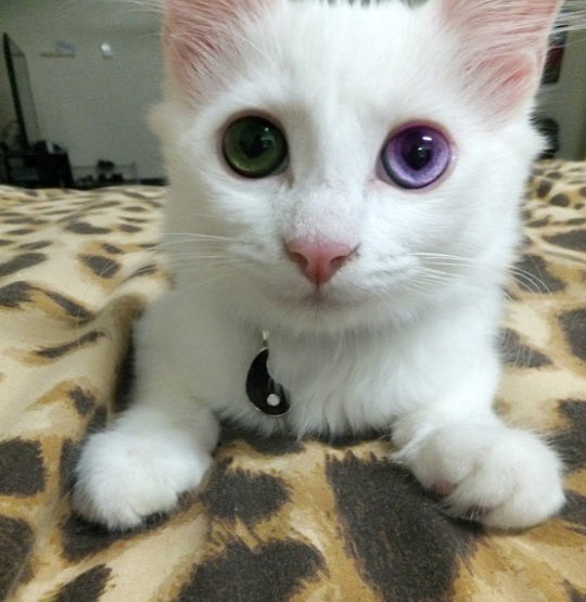 That Eye Color
