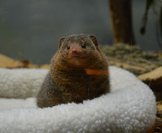 cute-mongoose-animal-zoo