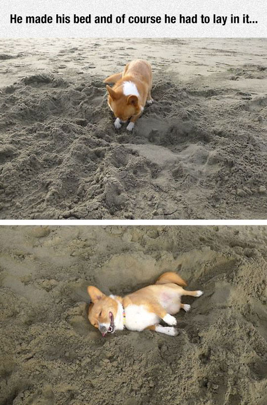 Just Another Day In The Life Of A Corgi