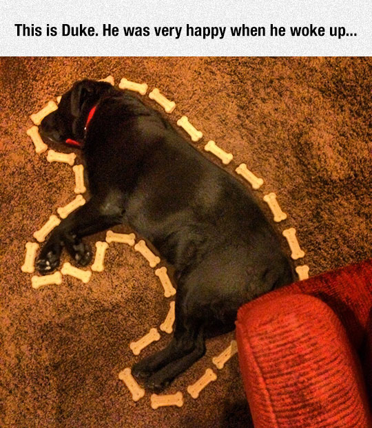 cute-puppy-sleeping-snacks-floor