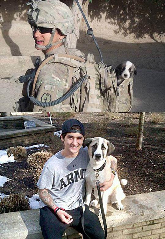 Found In Combat Puppy