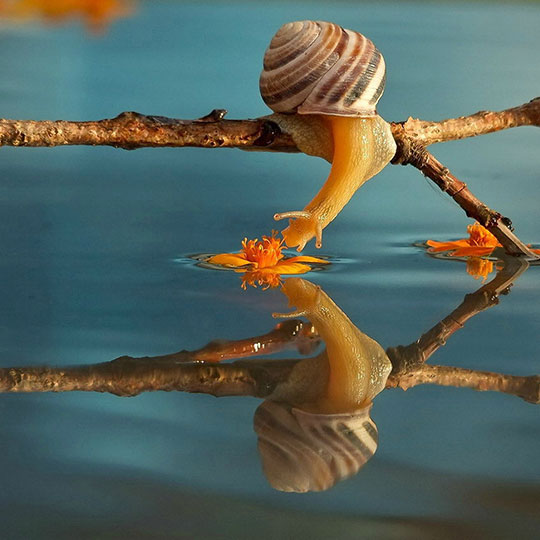 cute-snail-smelling-flower-water