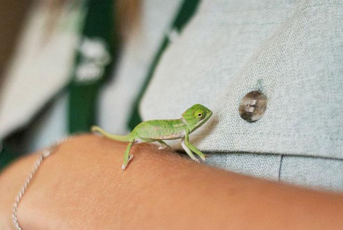 cute_baby_chameleons_11