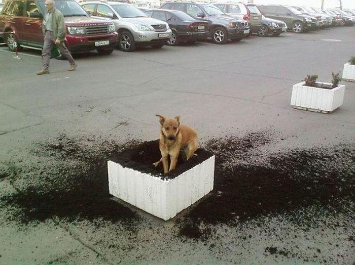 dogs_assholes_15