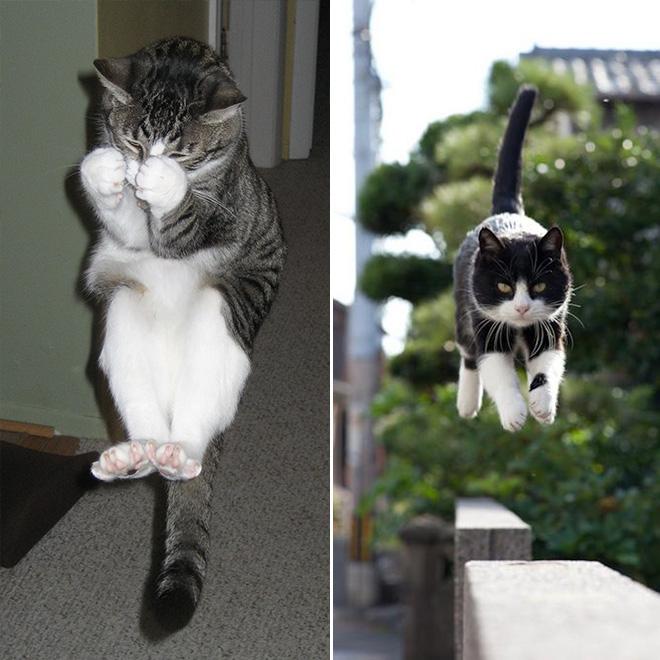 flying-cat11