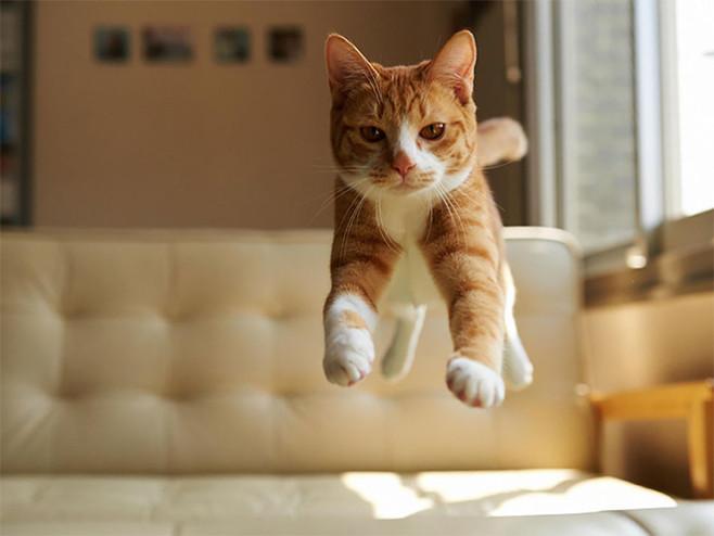 flying-cat12