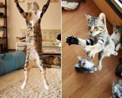 flying-cat14