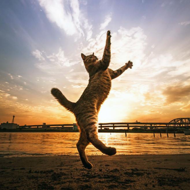 flying-cat15