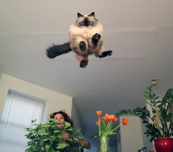 flying-cat16
