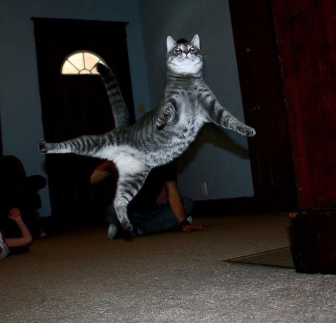 flying-cat17