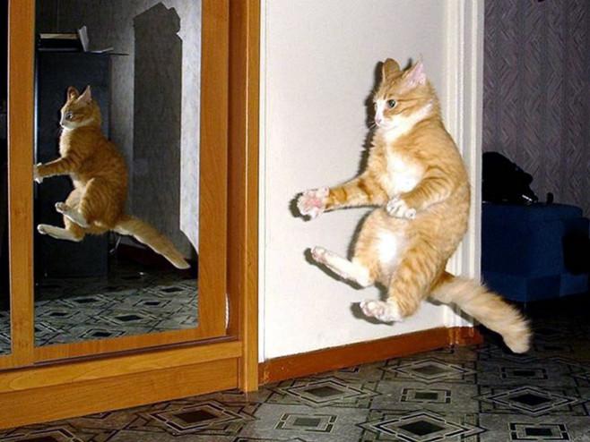 flying-cat2