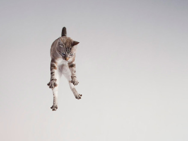 flying-cat5