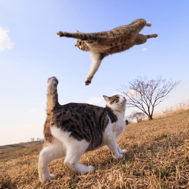 flying-cat6