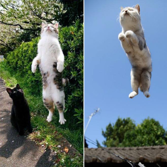 flying-cat7