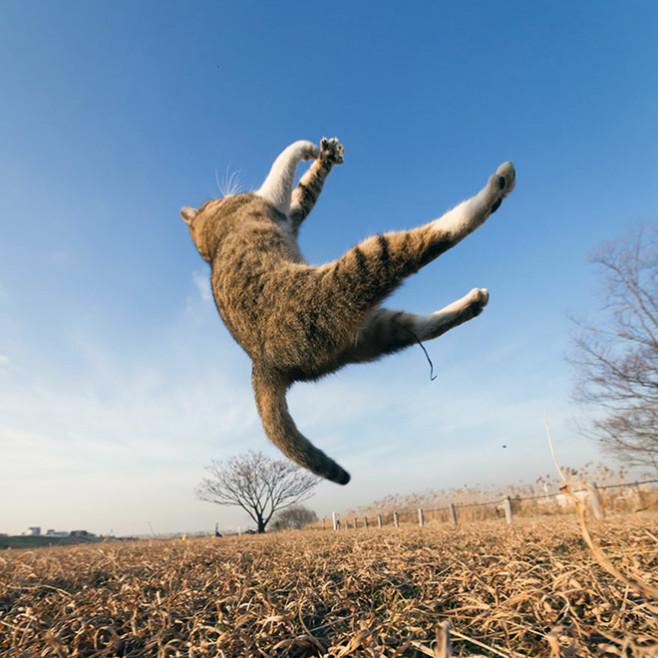 flying-cat9