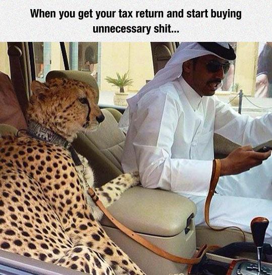 funny-Arabic-car-leopard-pet
