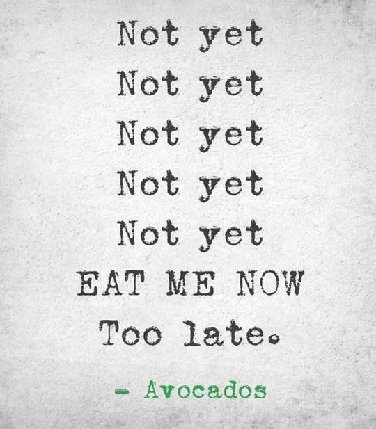 funny-Avocado-eat-quote-late