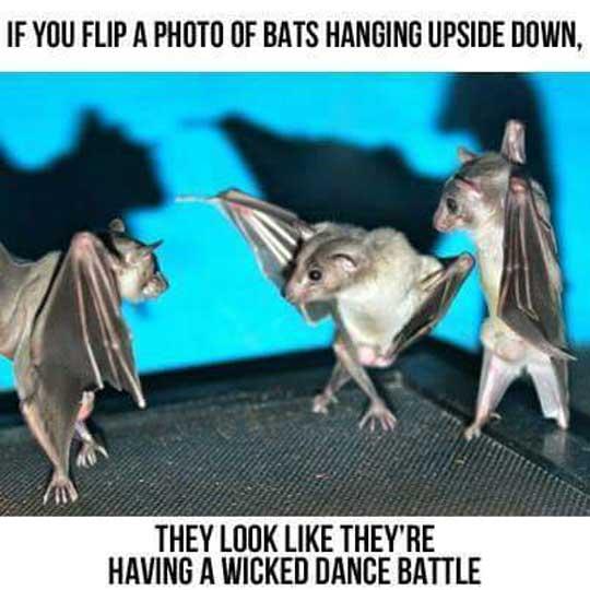 If You Flip It Upside Down