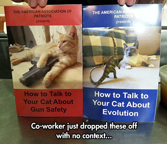 Kitty Education Is Very Important