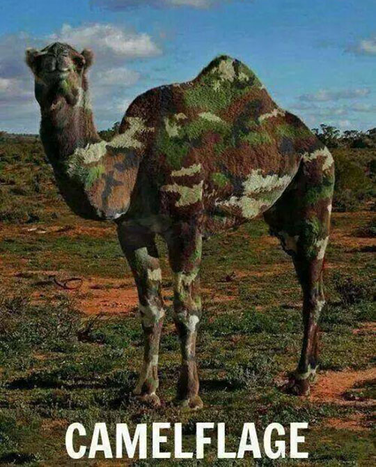 funny-camel-camouflage-painted