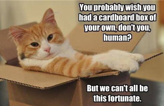 Sorry Human, Now Deal With It