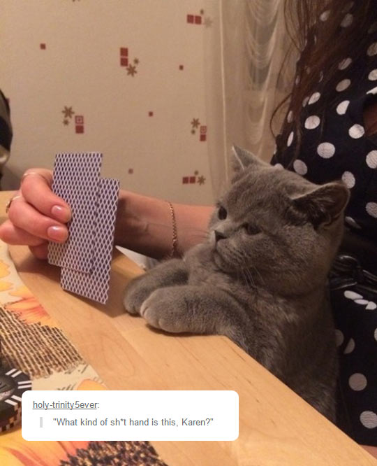 funny-cat-cards-playing-owner