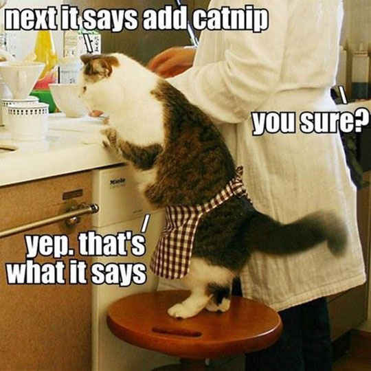 Cooking With The Kitty