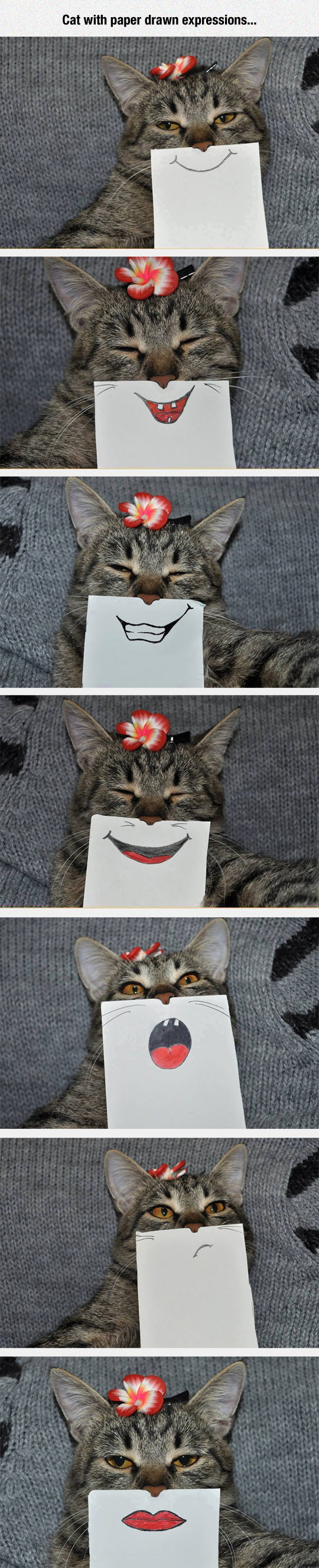 funny-cat-drawing-mouth-expressions