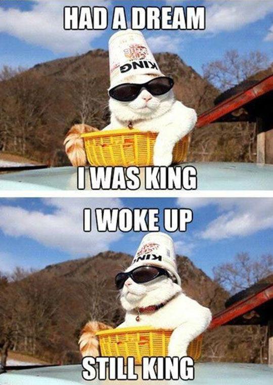 funny-cat-glasses-king-hat